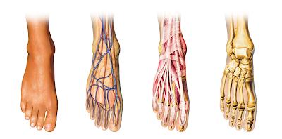 Diagnostika a terapie funkce nohy zpohledu vývojové kineziologie