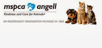 Angell Animal Medical Center Boston Externships