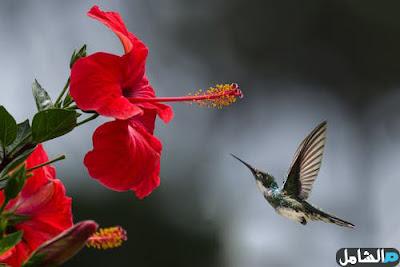 صور حلوة لطائر مع اجمل الصور