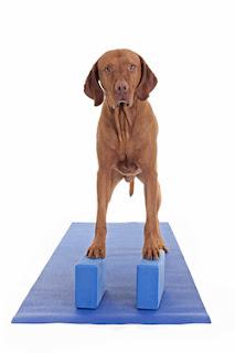 cães e o equilibrio