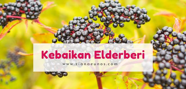 Kebaikan elderberi untuk kesihatan