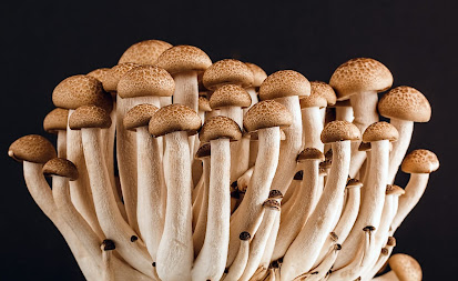 Which variety of mushrooms is the healthiest?
