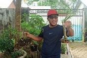 Pegiat Bonsai: Jangan Rusak Ekosistem Hutan!