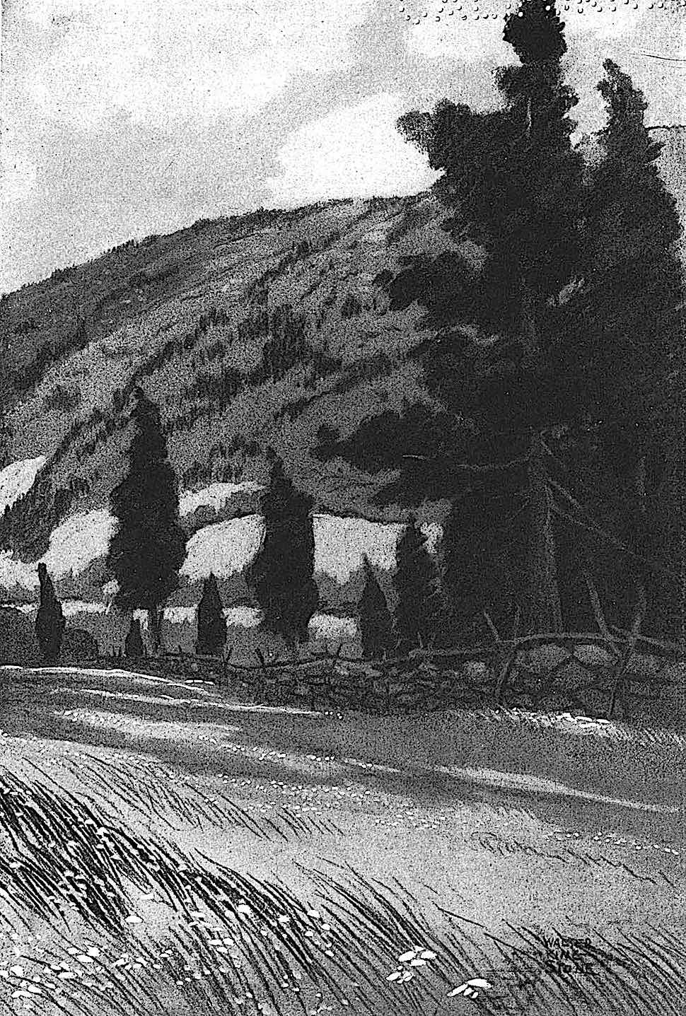 Walter King Stone illustration 1920, wild field with trees
