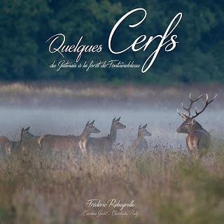 Quelques cerfs Fontainebleau Gâtinais