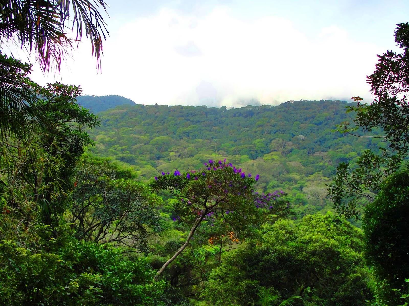Floresta da Tijuca no Rio de Janeiro : Dicas do que fazer.