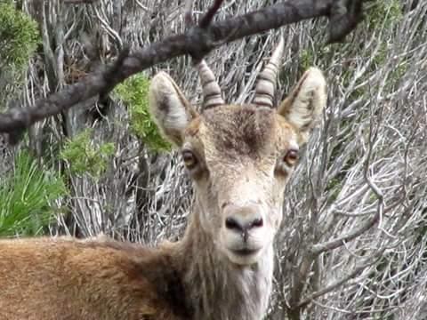Variado fotos beceite beseit toll rabosa cabras estrechos pesquera 3