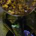 Chile en Nogada, resalta el talento y la riqueza de la cocina poblana