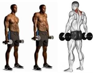 Retracción escapular para trabajar el músculo trapecio