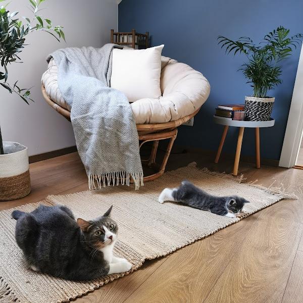 Uus kass majas ehk kuidas läks teise kassi võtt ja kohanemine