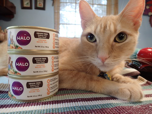 lone star cats halo grain free indoor cat canned food from chewy