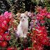 Τι είναι μία γάτα για το ζωικό βασίλειο;