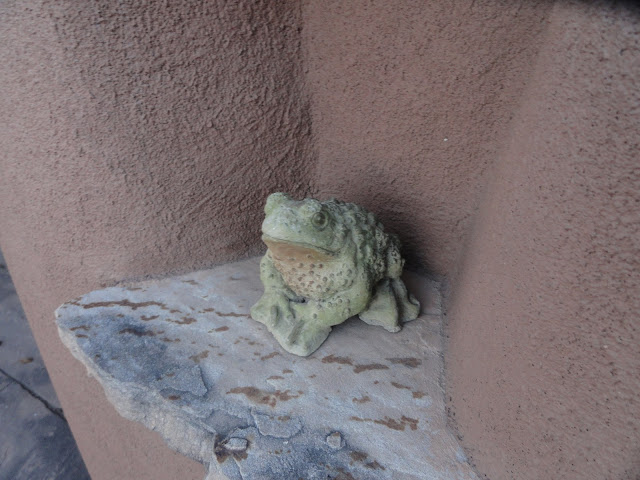 Imaginary frogs in real gardens?