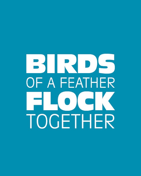 100+ EPIC Best Birds Of A Feather Flock Together Quotes