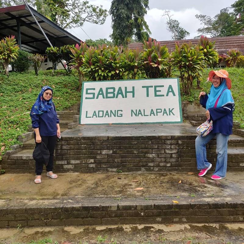 Jalan Jalan Minum Teh di Sabah Tea Garden Ranau Sabah 2020