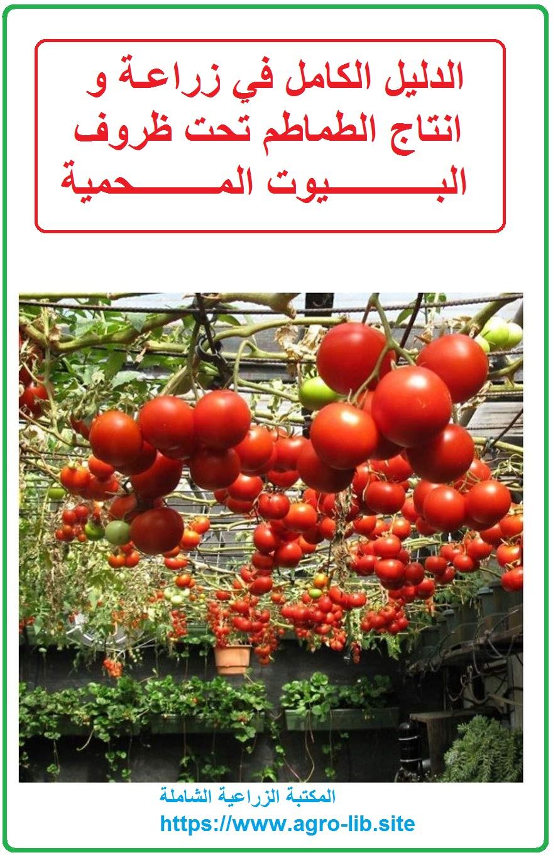 كتاب : الدليل الكامل في زراعة و انتاج الطماطم تحت ظروف البيوت المحمية