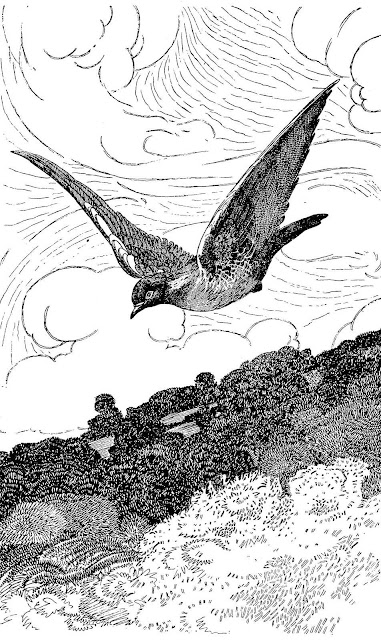 Charles Robinson illustration of a flying bird