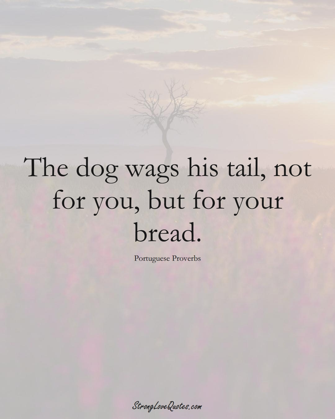 The dog wags his tail, not for you, but for your bread. (Portuguese Sayings);  #EuropeanSayings