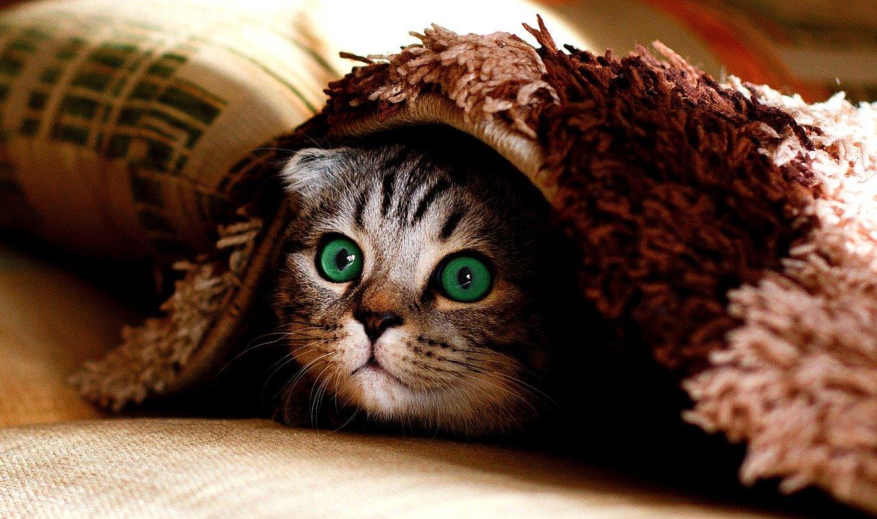 Même les animaux ont le sens de l'humour, voici des blagues qui vous feront rire.