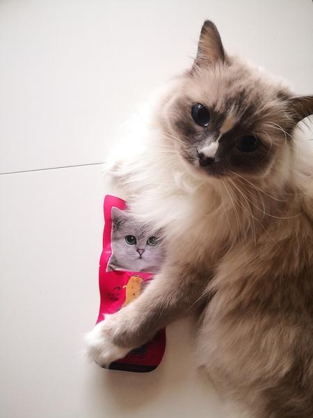 My Little Friandise recenzja, Portica, test kocich przysmaków, naturalny przysmak dla kota