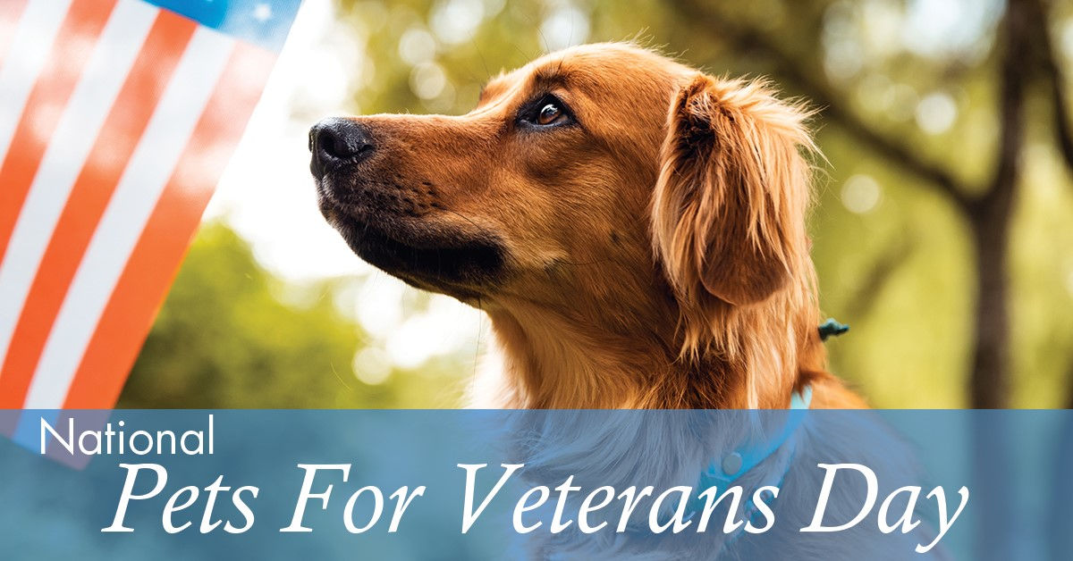 National Pets for Veterans Day Wishes pics free download
