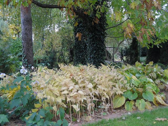 kokoryczka jesienią