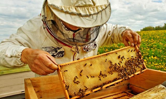 Σε αναμονή του πευκόμελου οι Μελισσοκόμοι της Πελοποννήσου