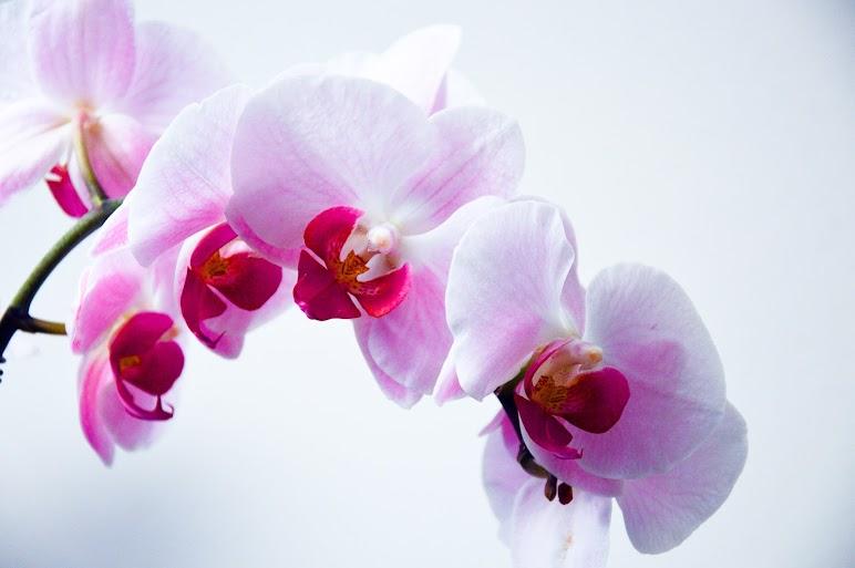 Flower Nature Orchid Plant