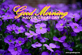 "greetings message "" good morning have a great day ""  located top center of the image.and purple colour flowers meadows website name located at right corner of the image : greetings.live"