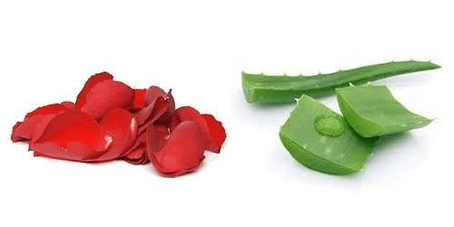 Ingredientes para hacer un tratamiento de rosas y sábila