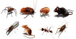 Diệt côn trùng tại Vĩnh Phúc