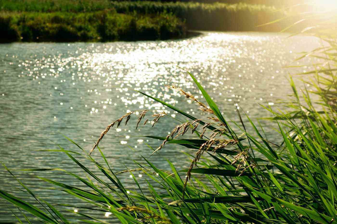 sun on grass and river - how to travel the world without leaving your home