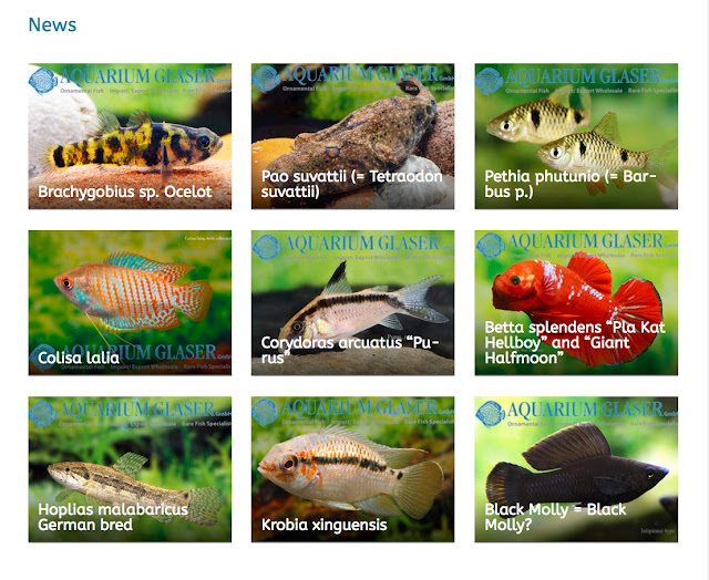 аквариумные рыбки под заказ