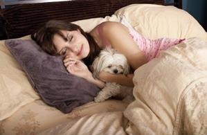 cães dormindo com o dono