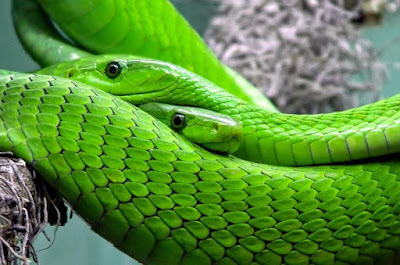 Facts about snakes