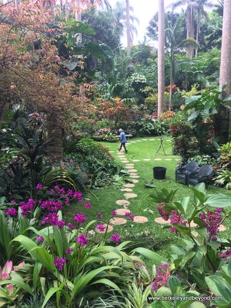 gully garden at Hunte's Gardens in Barbados