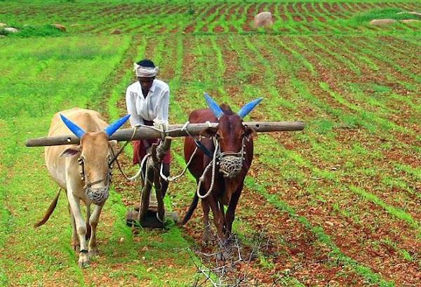 "Essay on ""An Indian farmer""(Short & Long Essay)"