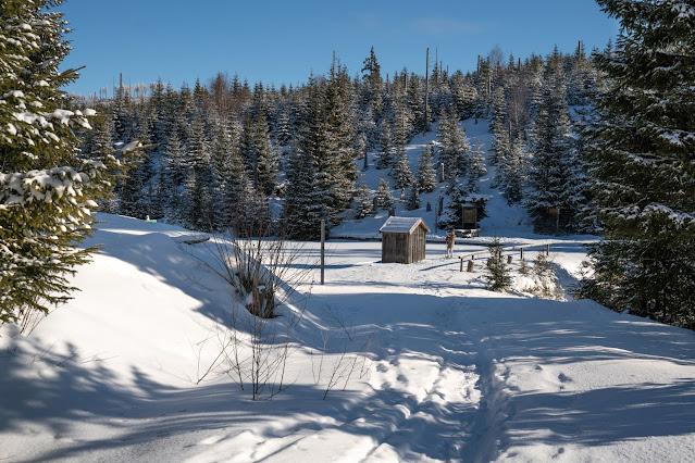 Winterwandern Mauth-Finsterau  Reschbachklause – Siebensteinkopf  Nationalpark Bayerischer Wald 09