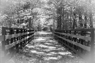 Farmington Trail _7744 Photo Print
