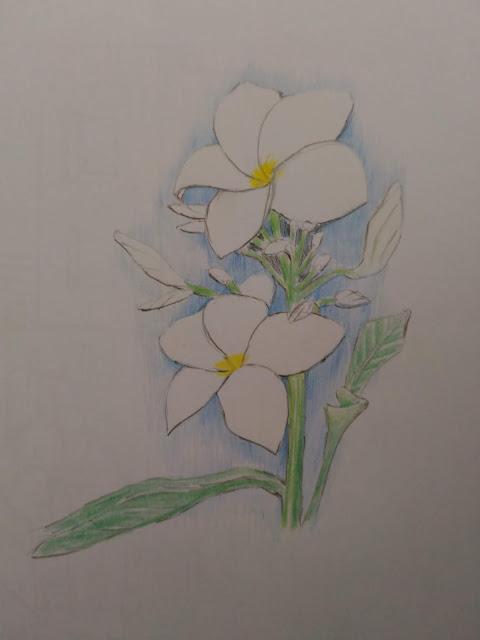 Flowers colour pencil art