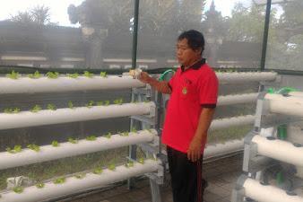 Dinas Pertanian Pangan Jembrana Gelar Pelatihan Hidroponik