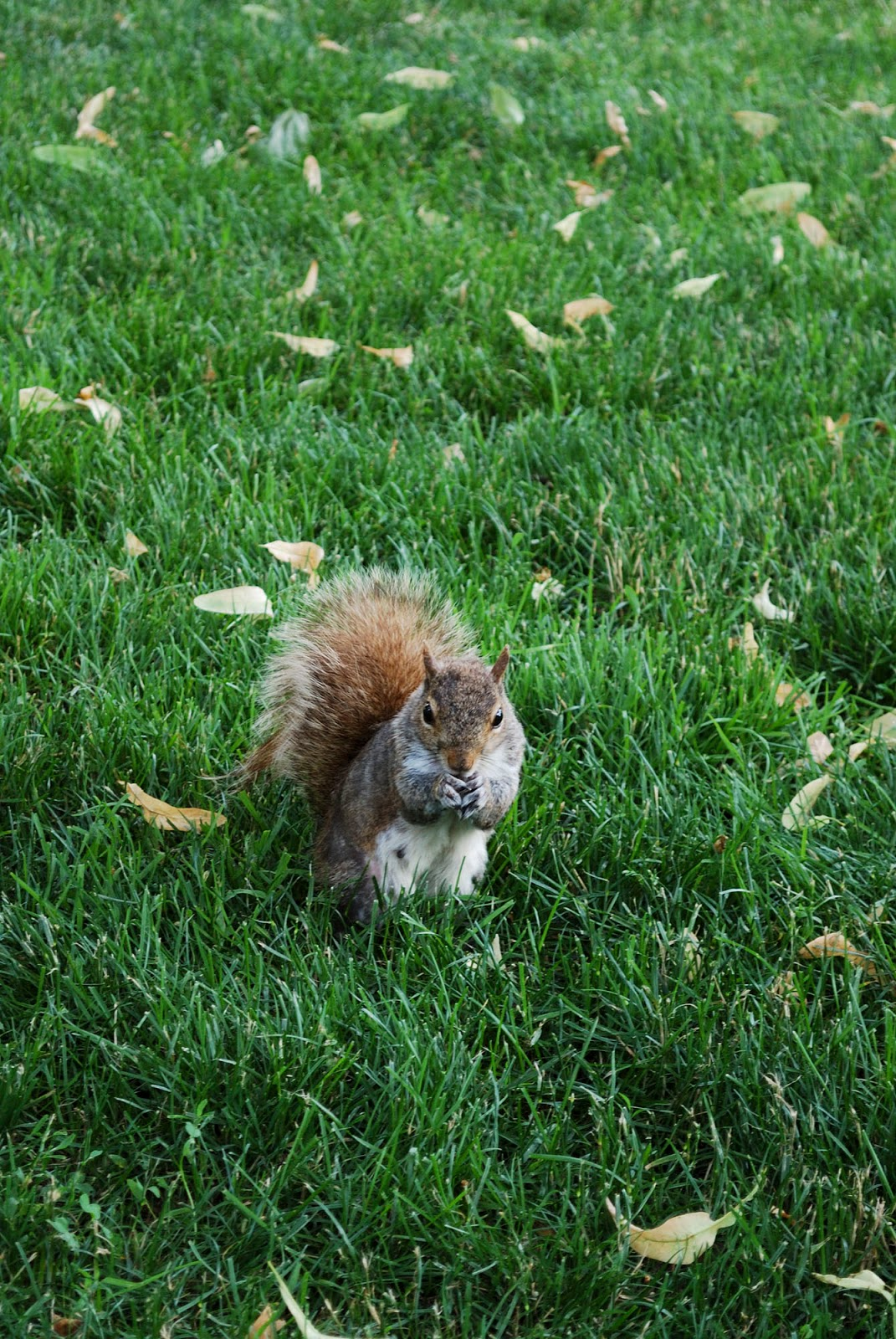 squirrel common boston itinerary plan guide tourism usa america park east coast