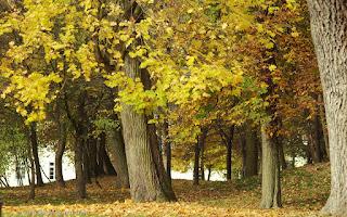 http://fotobabij.blogspot.com/2015/12/jesienny-klon-w-puawskim-parku.html