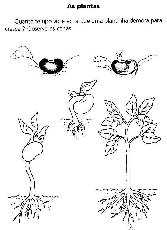 Muitas vezes Atividades Educativas sobre o Meio Ambiente - Atividades Pedagógicas YO92