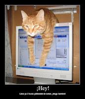 gato con hambre humor meme
