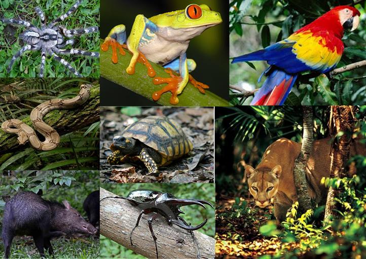 Plantas De Selva Alta: Selva Tropical Perennifolia: Marzo 2014