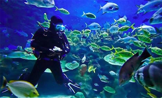 mergulho na ilha de pascoa