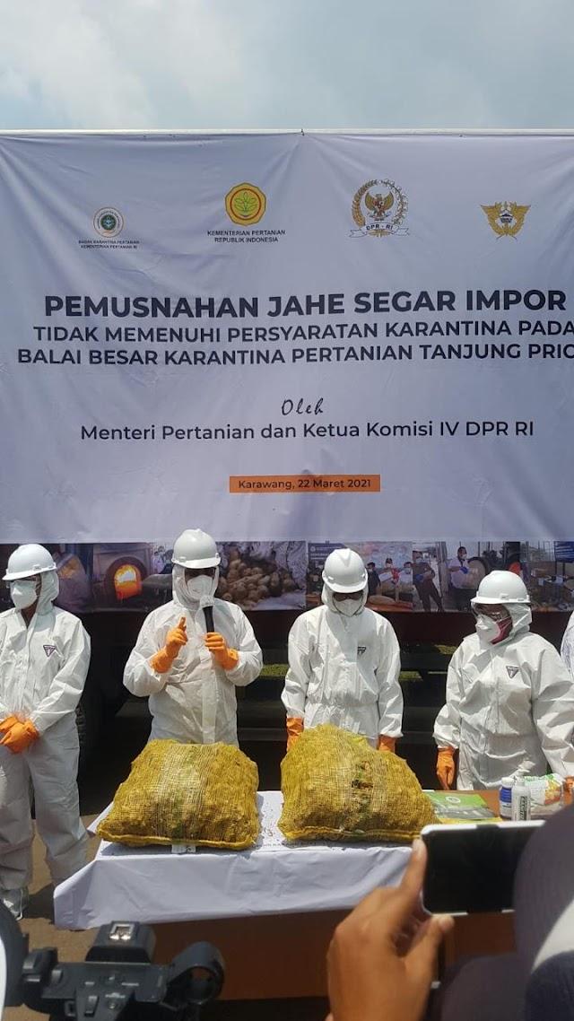 108 Ton Jahe Impor Asal Myanmar dan Vietnam Dimusnahkan