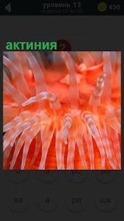 275 слов под водой растет актиния красного цвета 13 уровень