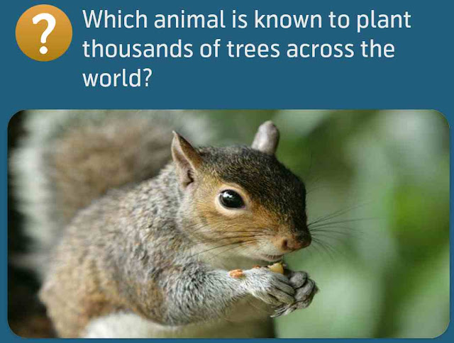 Which animal is known to plant thousands of trees across the world?